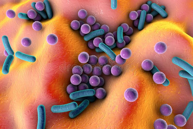 Bakterier på yttersida av hud, slemhinnan eller inälvan stock illustrationer