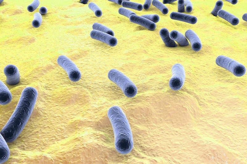 Bakterier på yttersida av hud, slemhinnan eller inälvan vektor illustrationer