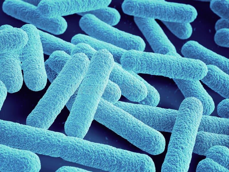 bakterier stänger sig upp coli escherichia royaltyfri illustrationer