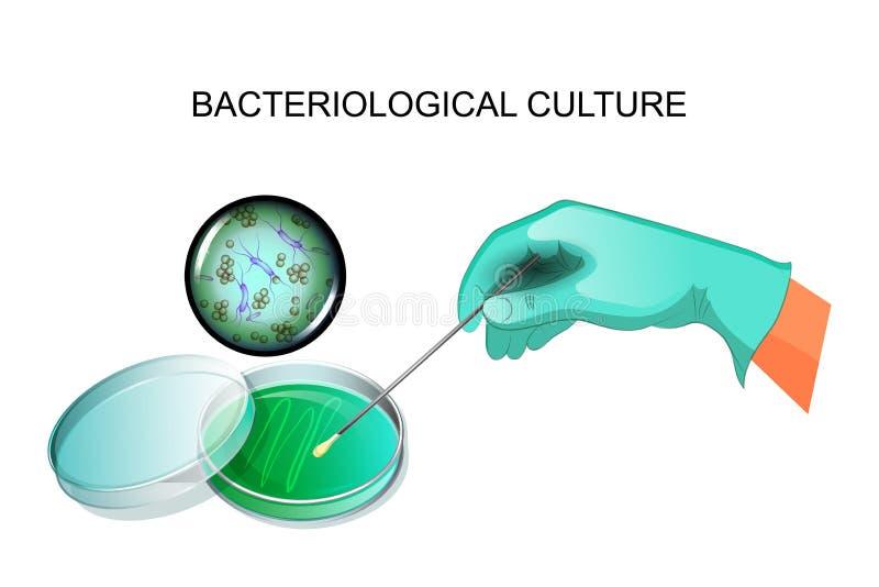 Bakteryjny oczkowanie w laboratorium ilustracja wektor
