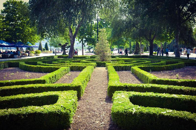 Baku embankment, green plants royalty free stock photography