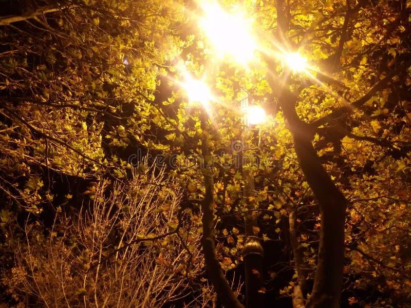 Baku-Seeseiten-Nachtansicht lizenzfreies stockbild