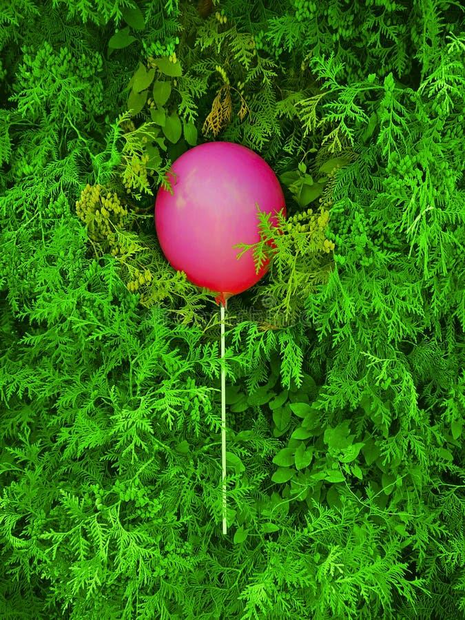Balão cor-de-rosa em um cipreste verde no parque foto de stock royalty free