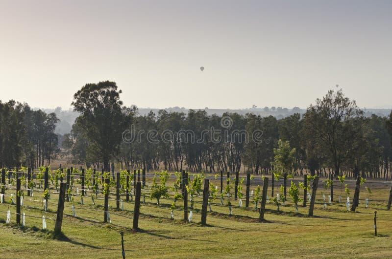 Balões de ar quente sobre Smokey Vineyard fotografia de stock royalty free