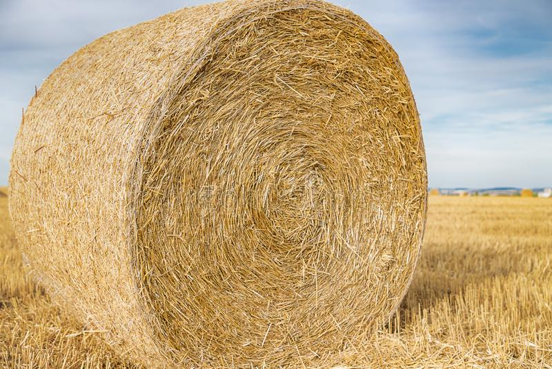 Bala da palha no campo Close-up Campo agricultural imagem de stock