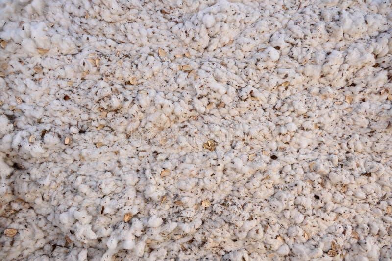 Bala recién cosechada de algodón blanco crudo comprimido imágenes de archivo libres de regalías