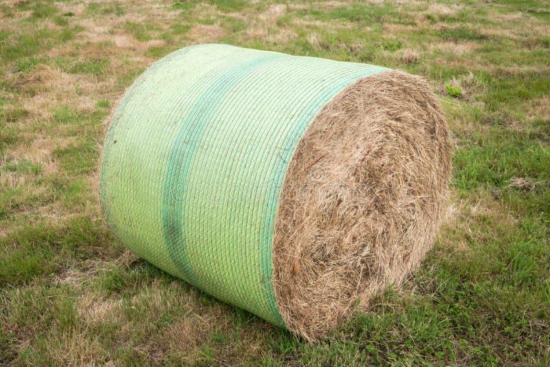 Bala redonda de la mala hierba fotos de archivo