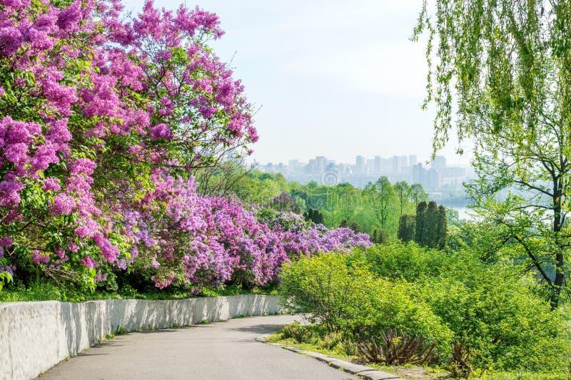 Balade dans la nature en ville photos stock