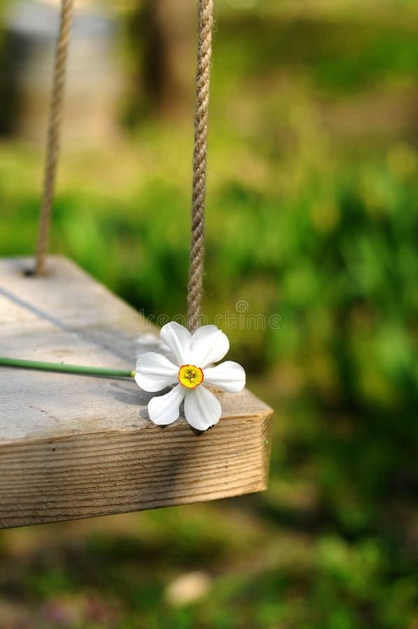 Balanço da flor da mola foto de stock royalty free