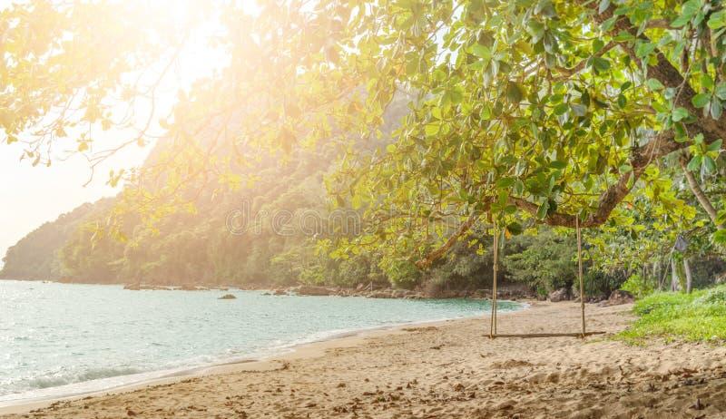 Balanço de madeira da corda que pendura na árvore na praia tópica com luz solar foto de stock
