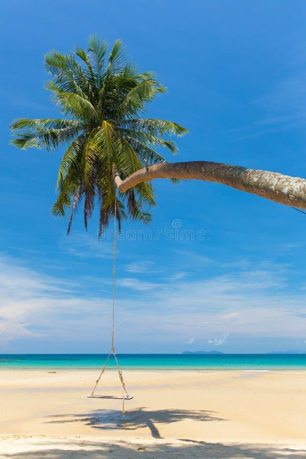 Balanço de madeira que pendura na palmeira na praia tropical imagem de stock