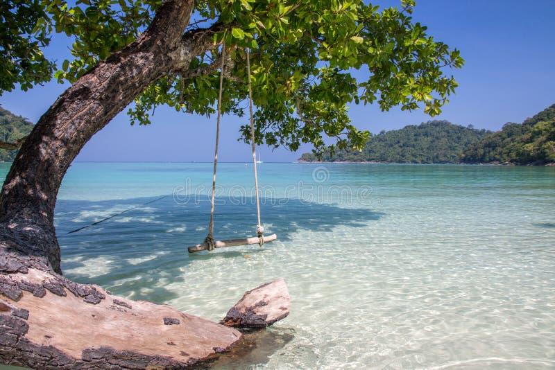 Balanço e árvore ao lado da costa com o céu azul claro foto de stock royalty free