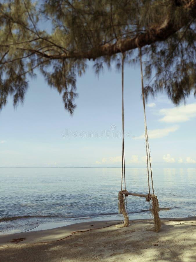 Balan?o de madeira que pendura de uma ?rvore na praia na manh? com luz do sol foto de stock