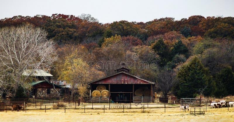 Balance a casa e o celeiro com os pacotes de feno redondos suportados às árvores do outono no monte com as vacas nas penas na par fotografia de stock
