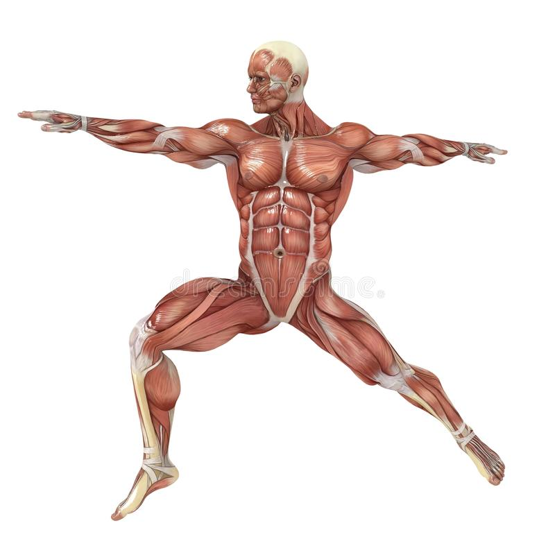 Balance. A male model showing the muscles and his flexibility vector illustration