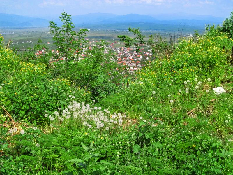 Balance between nature and urbanization - view from peak of the mountain to Khust. Spring flowers and bright greens in the foregro. Und, blue mountains on stock image