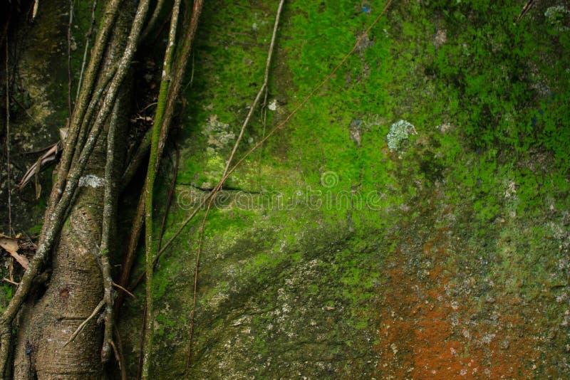Balance a parede coberta do verde e da laranja de musgo imagem de stock