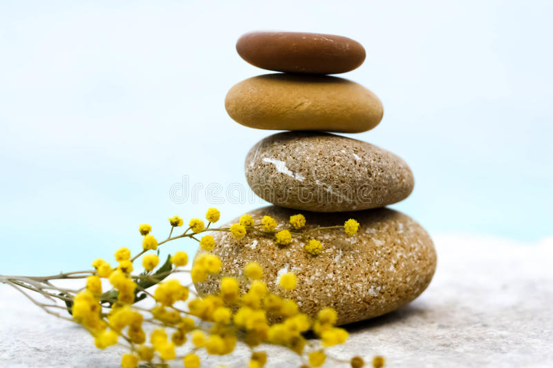 Balance. Yellow pebble stones with mimosa over the water stock images