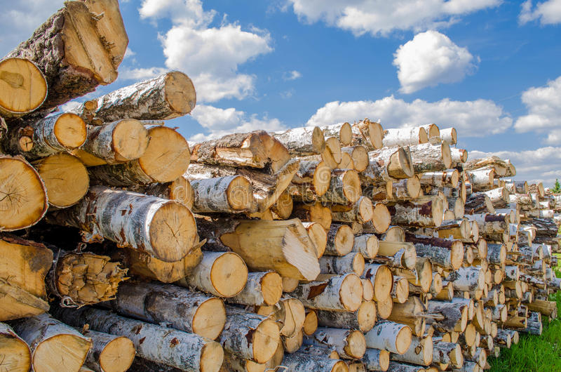Balances of birch. Birch balances delivered from the forest for further processing on a sunny bright day stock image