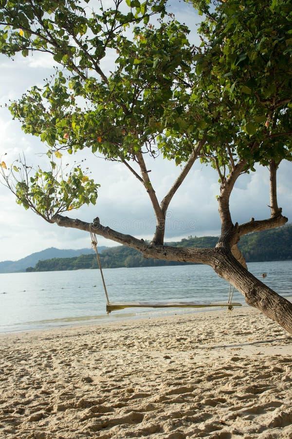 Balancez le coup d'un arbre au-dessus de plage, Phuket - Thaïlande photos stock