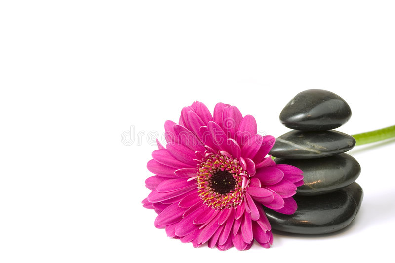 Balancierende Kiesel und Gänseblümchenblume stockfotos