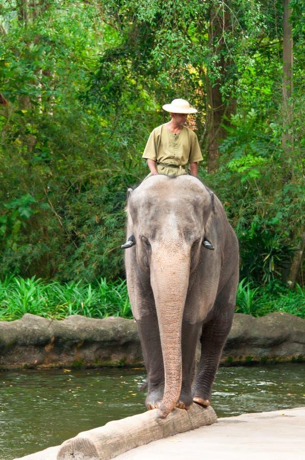 balansera elefantjournal royaltyfria bilder