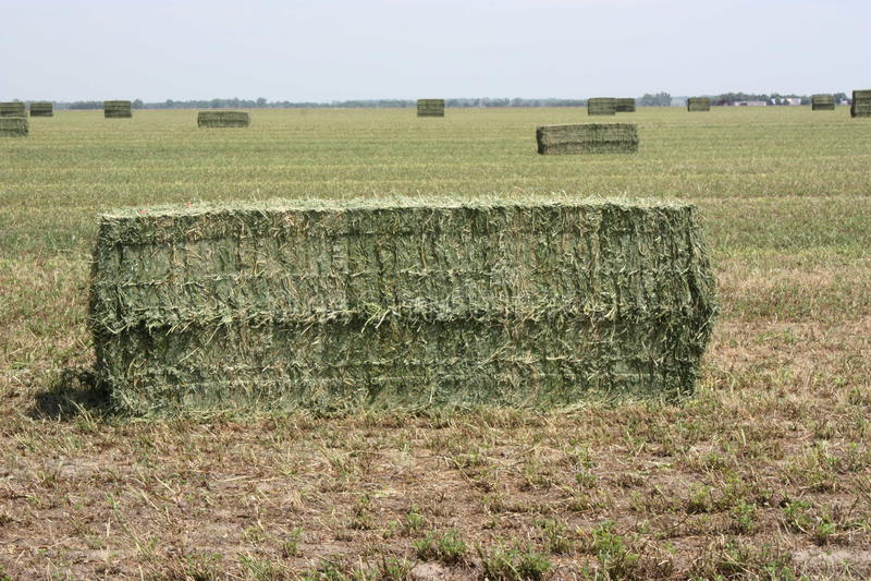 Balas de feno da alfalfa fotografia de stock