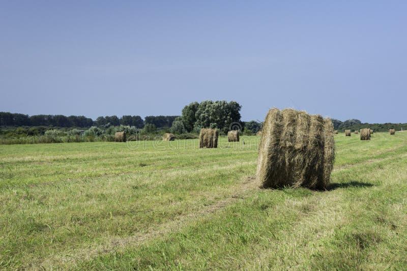 Balas de heno en campo verde en Holanda imagenes de archivo