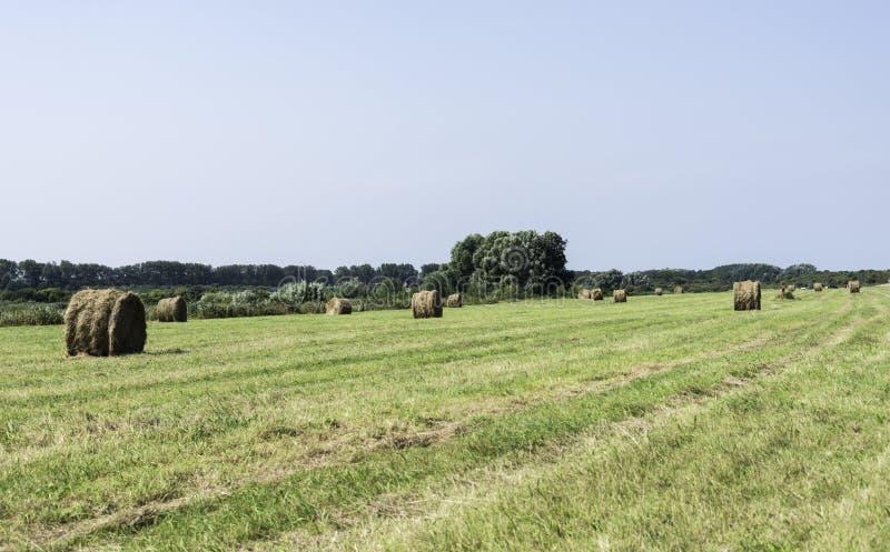 Balas de heno en campo verde en Holanda fotos de archivo libres de regalías