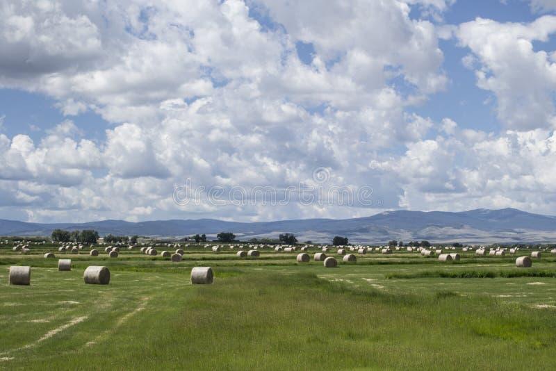 Balas de heno en un campo con el cielo nublado imagenes de archivo