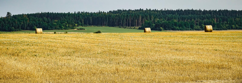 Balas de heno en un campo después de la cosecha fotos de archivo