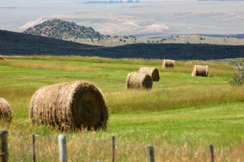Balas de heno redondas en el pasto verde de Wyoming foto de archivo