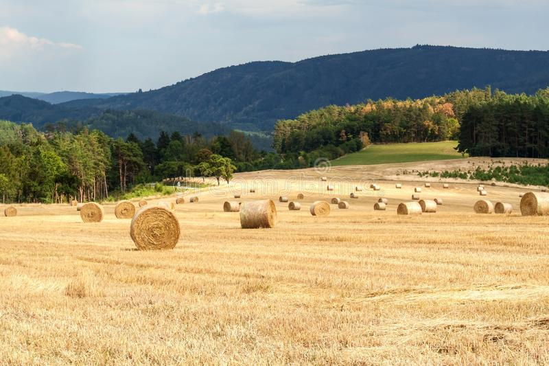 Balas de la paja en campo en el día de verano del bosque en la granja en la República Checa Maíz de la cosecha Montañas de Moravi fotografía de archivo