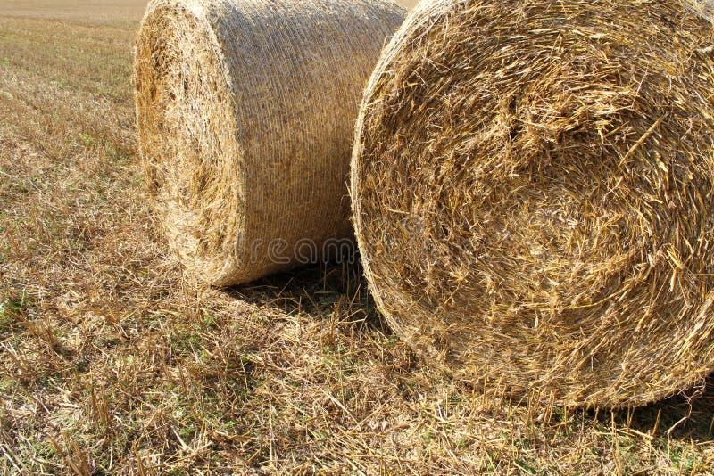 Balas de la paja en los campos de trigo imagen de archivo libre de regalías