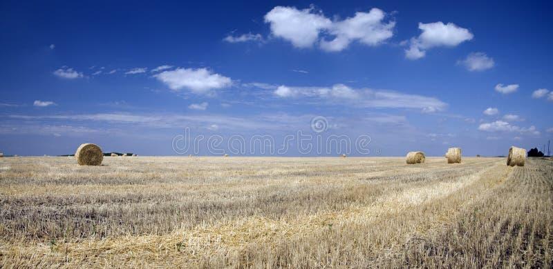 Balas de paja en un campo de trigo imágenes de archivo libres de regalías