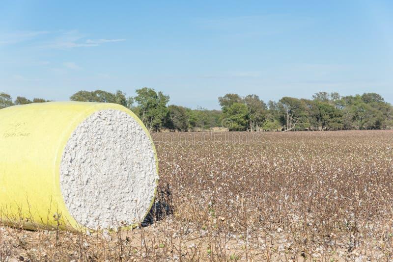 Balas del algodón del primer en campo cosechado en Tejas, los E.E.U.U. imagenes de archivo