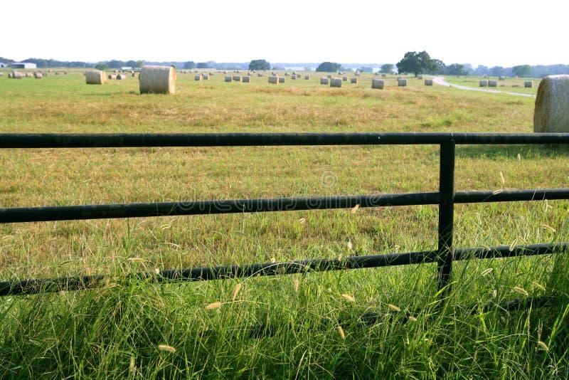 Balas redondas da exploração agrícola das pastagem do prado em Texas fotografia de stock
