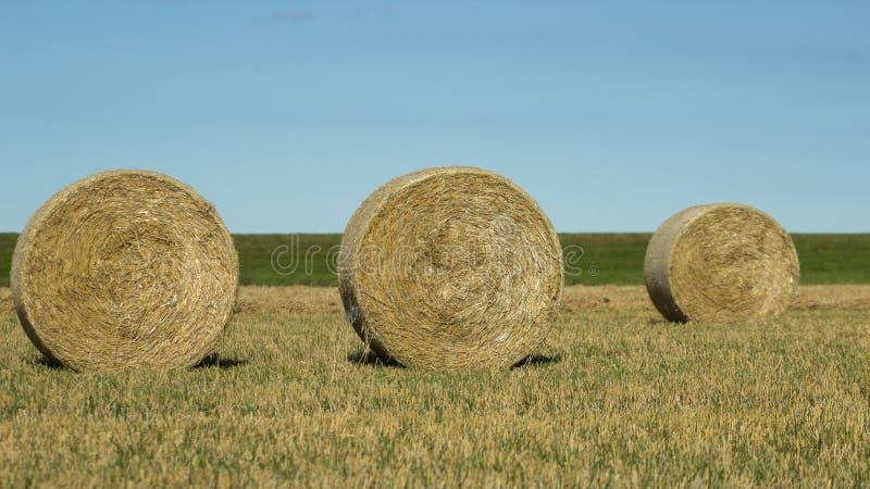 Download Balas redondas do feno imagem de stock. Imagem de campo - 26515805