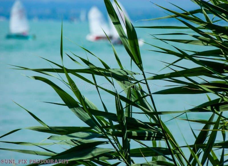 Balaton Lake royaltyfria foton