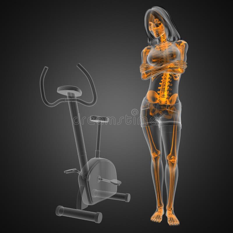 Balayage de radiographie de femme dans la chambre de gymnastique illustration stock