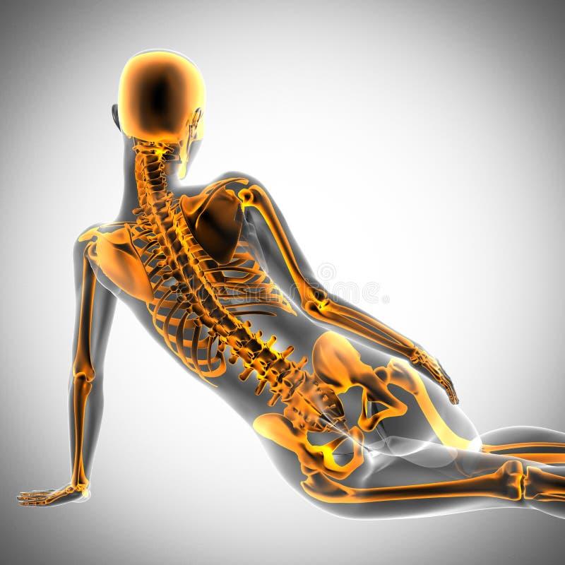 Balayage de radiographie de femme sur le fond blanc illustration stock