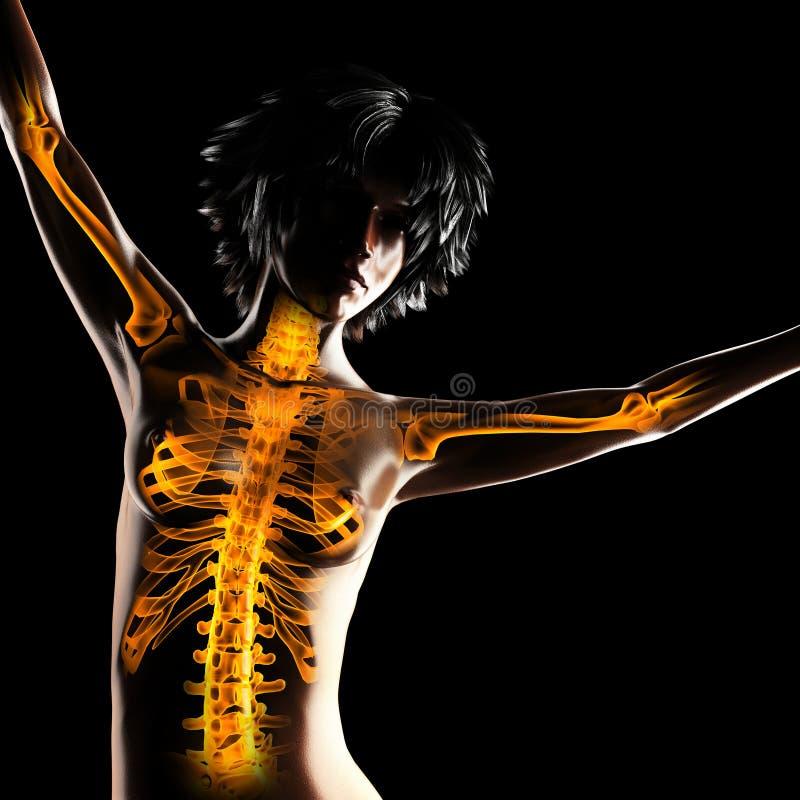 Balayage de radiographie de femme illustration libre de droits