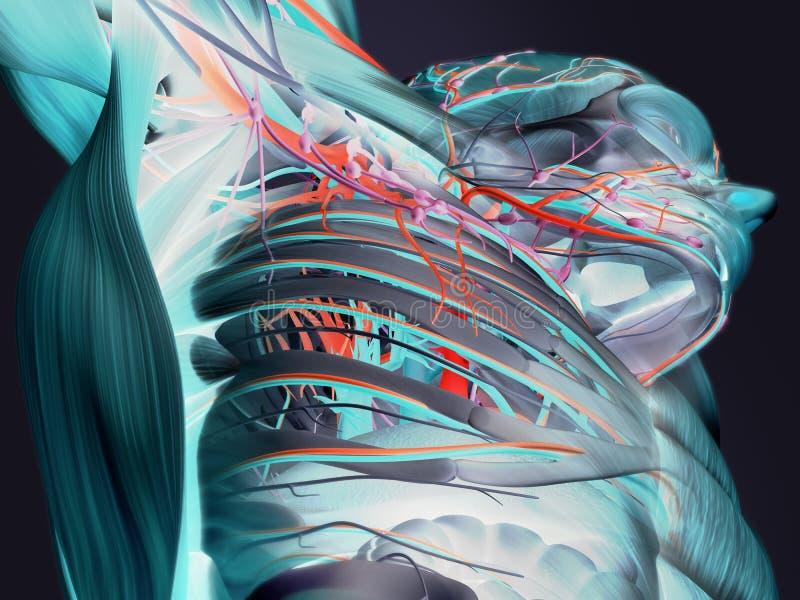 Balayage futuriste de crâne photo libre de droits