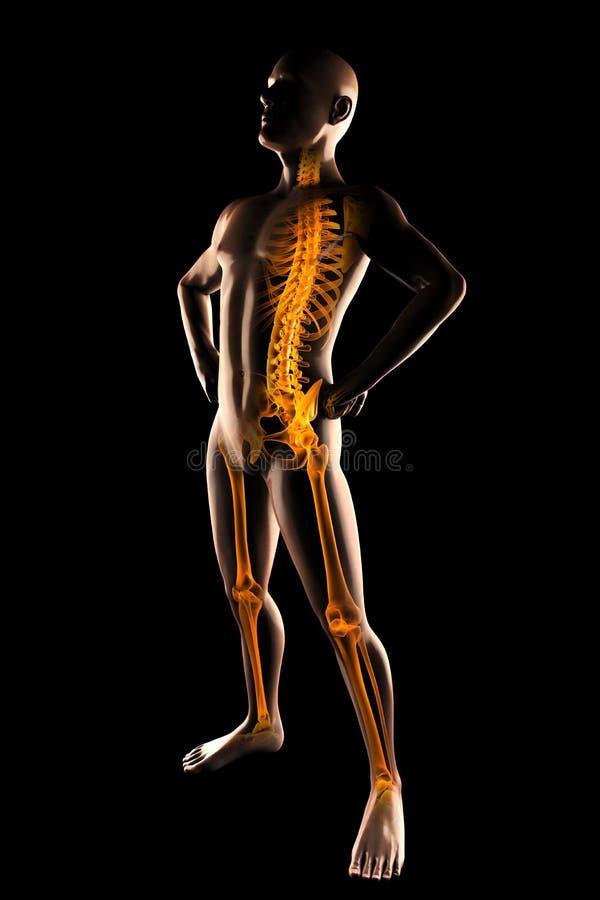 Balayage humain de radiographie illustration libre de droits