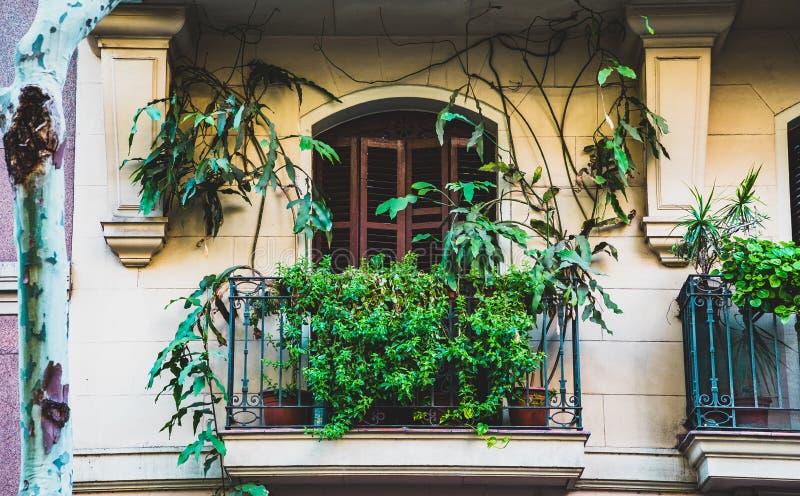 Balcão retro com as plantas na fachada mediterrânea e na arquitetura foto de stock