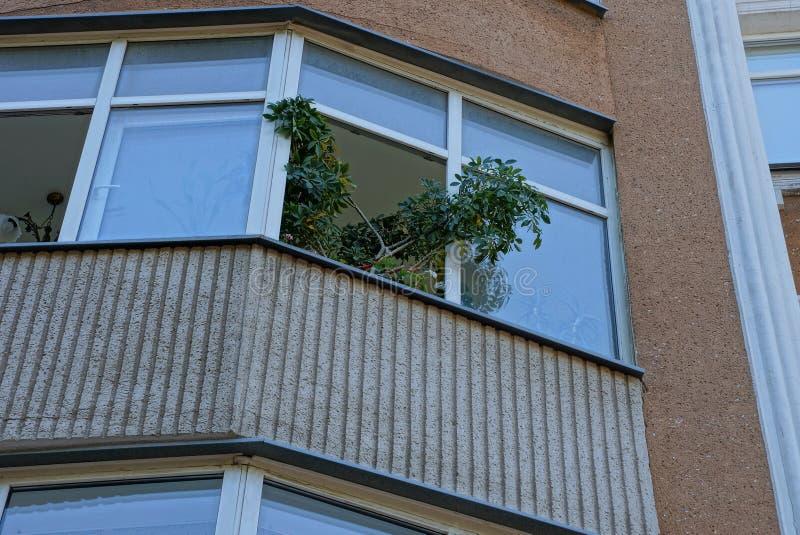 Balcón de Brown con una rama de una planta verde decorativa en una ventana abierta imagenes de archivo