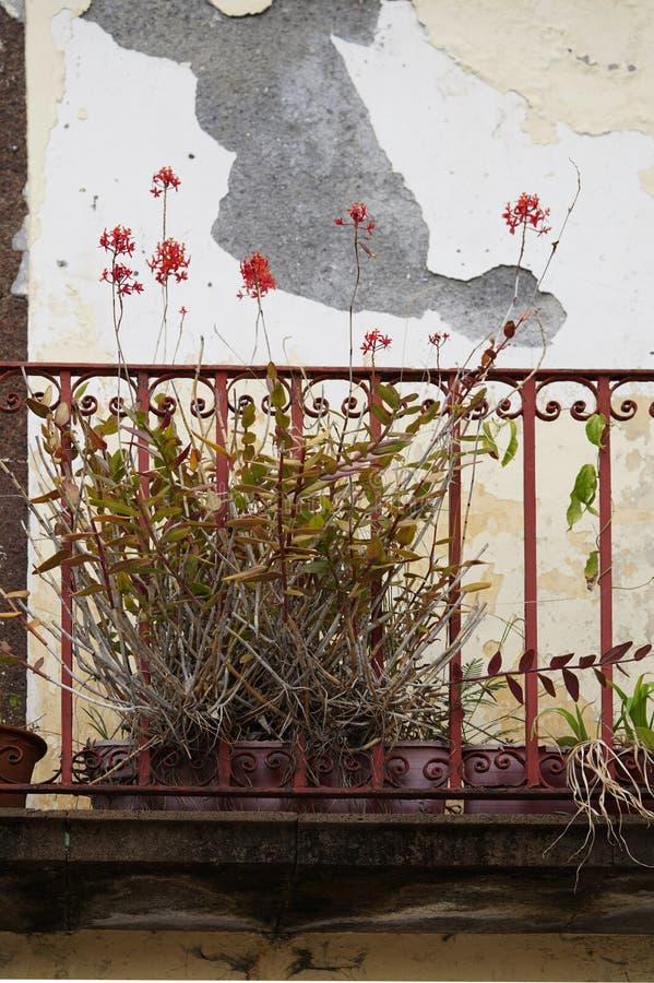 Balcón mórbido con las plantas fotografía de archivo libre de regalías