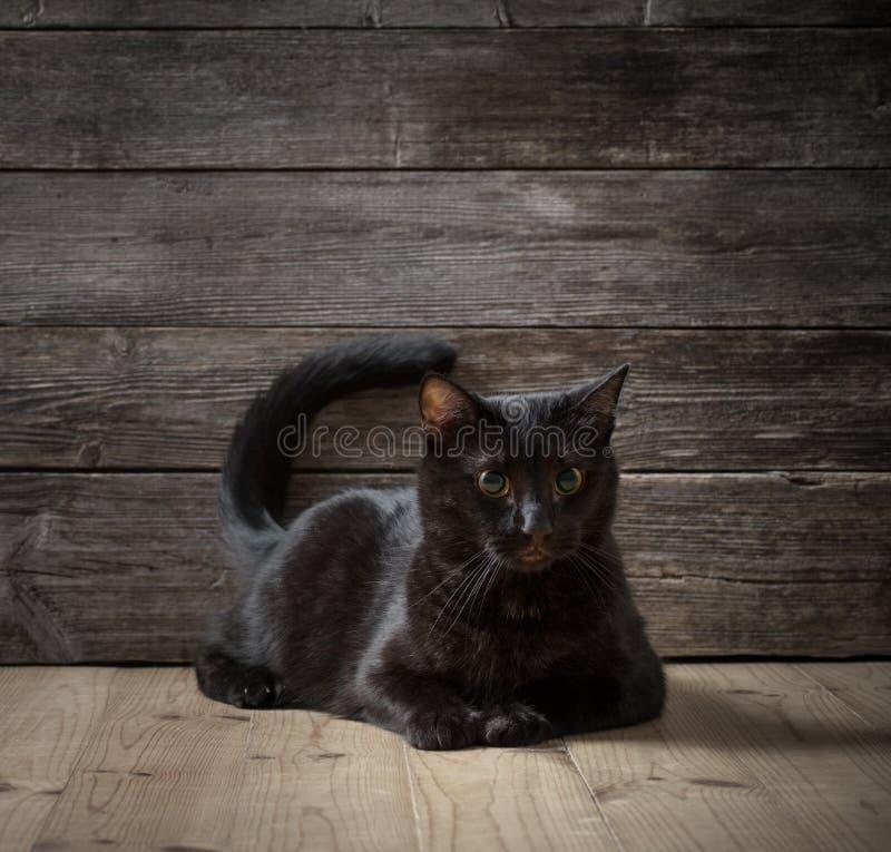 Balck cat on dark wooden background. The balck cat on dark wooden background royalty free stock photos