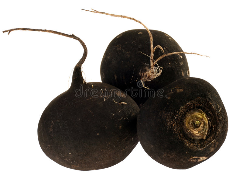 Download Balck radish stock photo. Image of healthy, root, isolated - 4471046