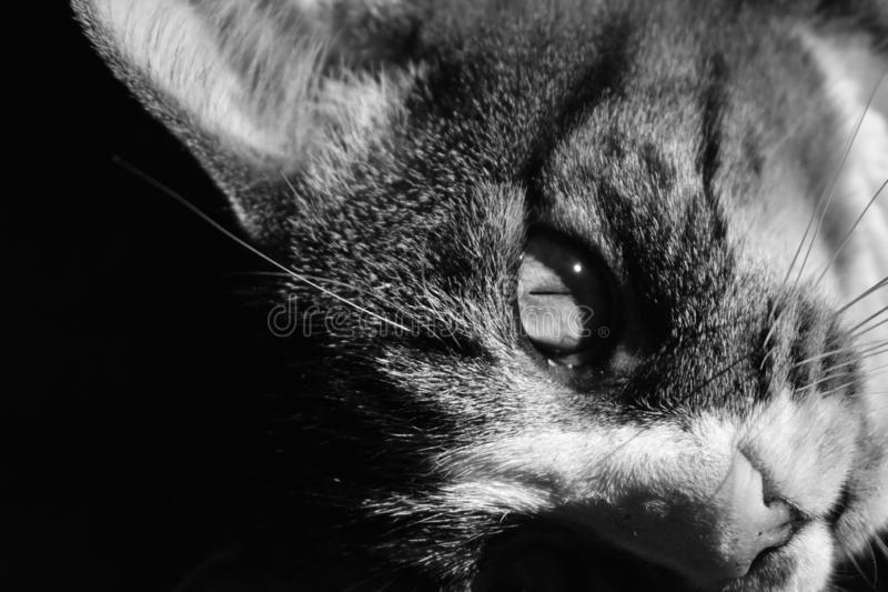 Balck and white, cat close up. Abstract royalty free stock image